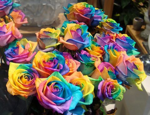 a bunch of rainbow roses for sale