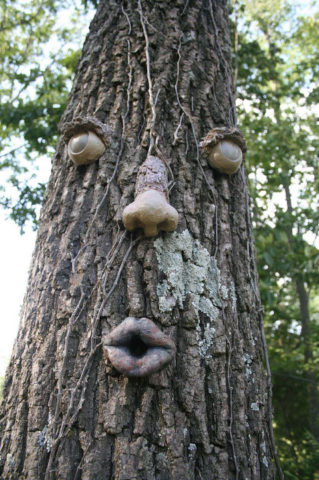 big-tree-face-by-Garrette.jpg