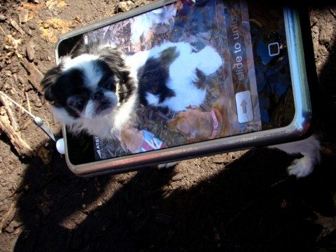 dog-iphone-costume
