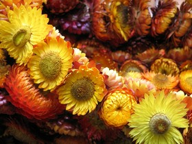dried-flower-garland-by-sonnyleon.jpg
