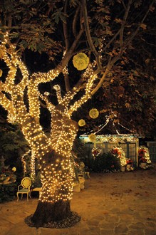 halloween-tree-lights-by-Wonderlane.jpg