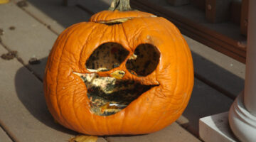 Pumpkin Rot: How To Stop It (…Prevent Shrinkage & Prolong the Life of Your Pumpkin Carvings)