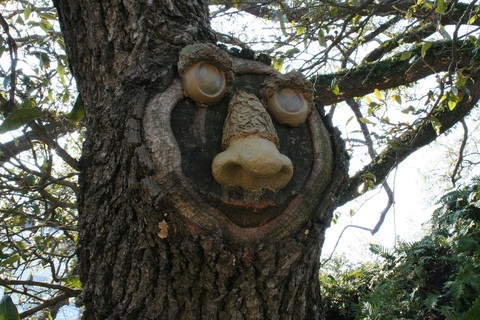 This is a rather odd looking tree face. See how to make your own tree face art, talking trees, and more!