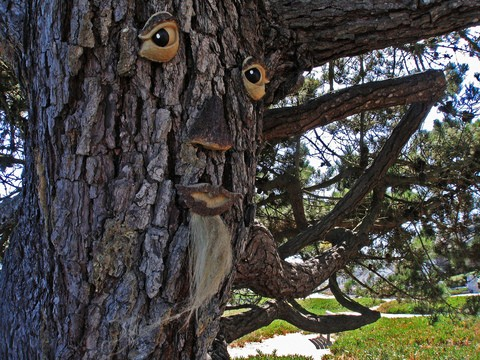 This is a great example of an old man tree face. See how to make your own tree face art, talking trees, and more!