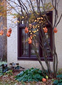outdoor-halloween-tree-pumpkins-by-Ann_Althouse.jpg