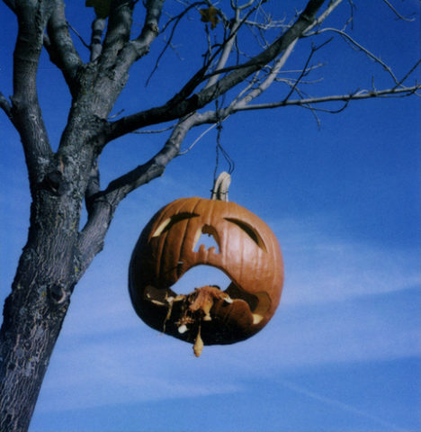 pumpkin-hanging-from-tree-by-Supercapacity.jpg