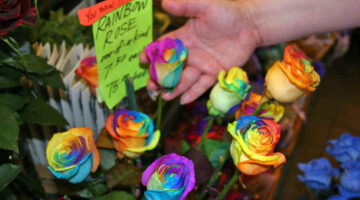 Rainbow Roses Are Extra Special Flowers For The Extra Special People In Your Life