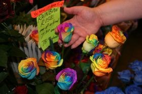 rainbow-roses-for-sale-by-McSushi.jpg