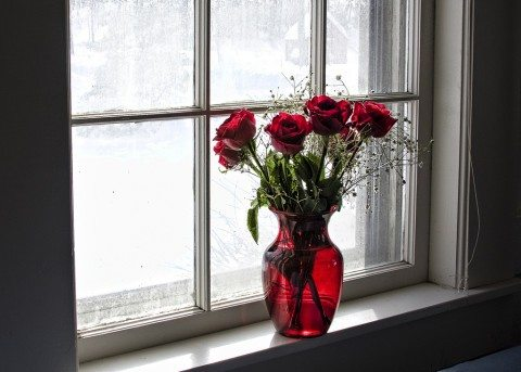 red-roses-in-a-vase
