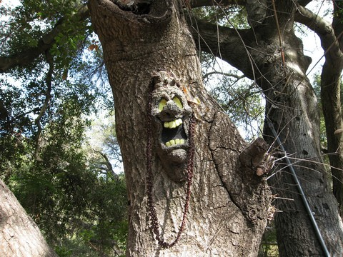 This is an example of a scary screaming Halloween tree face. See how to make your own tree face art, talking trees, and more!