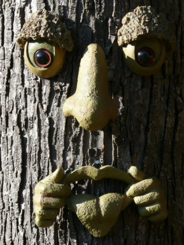 This is an example of a tongue tree face. See how to make your own tree face art, talking trees, and more!